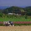 貸農園サービス